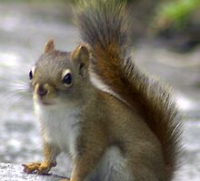 Squirrely by Mark Wuttke