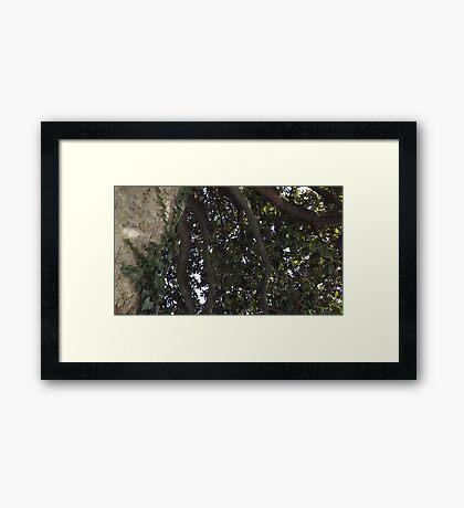 Blue Skies 004 Framed Print