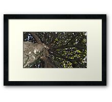 Blue Skies 005 Framed Print