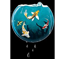 Koi Bowl Photographic Print