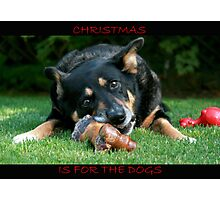 Christmas is for the Dogs Photographic Print