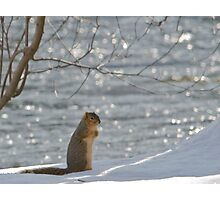 christmas day squirrel Photographic Print