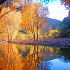 Arizona Winter by Chelsea Brewer