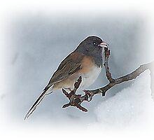 Chickadee  Bird On Christmas Day by Jonice