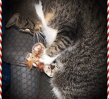 Bootsie And Her Christmas Toy by Jonice