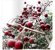 Winter berry tree Poster