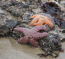 Ochre sea star or purple sea star by Edith Farrell