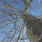 Blue Skies 021 by dge357