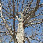 Blue Skies 022 by dge357