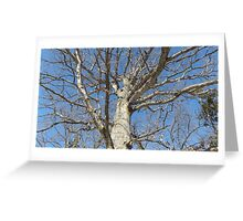 Blue Skies 022 Greeting Card