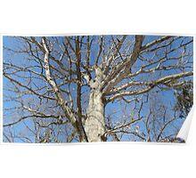 Blue Skies 022 Poster