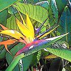Bird in Paradise by Kamalanirose