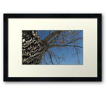 Blue Skies 024 Framed Print