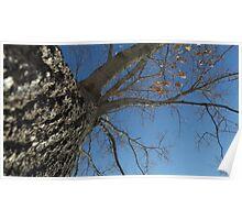 Blue Skies 024 Poster