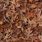 Fall Leaves by Pamela Maxwell