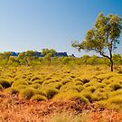 Spinifex Grass,Bungle Bungle Range by johnrf