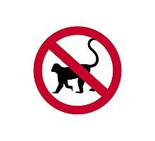 No monkey Photographic Print