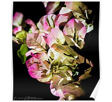 Twilight Bougainvillea Poster