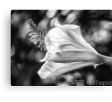 Hibiscus Unfolding BW Canvas Print