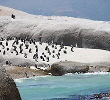 Penguin Rock by HELUA