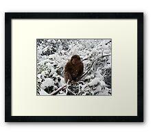 Monkey on Emei Shan, China Framed Print
