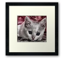 A Kitten Named Raiden Framed Print