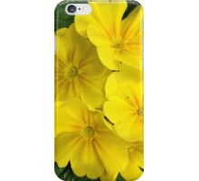 Yellow Primrose Flowers iPhone Case/Skin