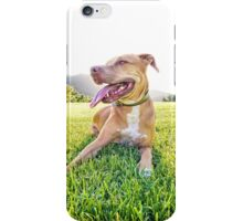 My pup Ray enjoying the sunshine iPhone Case/Skin