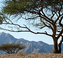 Desert trees, Fujairah, UAE by mojgan