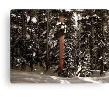 The Fir Canvas Print