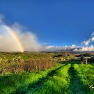 UpCountry Rainbow by Randy Jay Braun