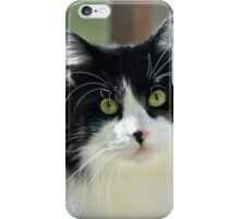 Male Tuxedo Maine Coon Cat | Middle Island, New York  iPhone Case/Skin