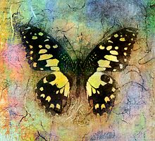Yellow Butterfly by Elena Ray