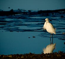 Morning Egret by Jonicool