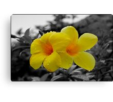Touch of Color Canvas Print