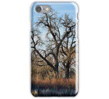 Cherry Creek Winter Study 2  iPhone Case/Skin
