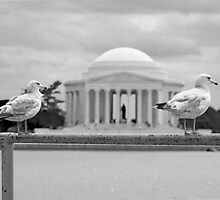 A Gull's View by KEJPStudios