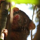 Possum in the garden by stephenwaters