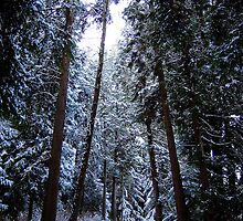 Winter Trails II by Peter Nielsen
