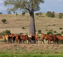 The watering hole by KylieB