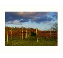 Vineyard at Sunset, Leeds Castle, Kent Art Print