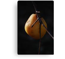 One Last Pear Canvas Print
