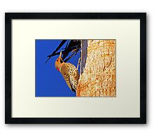 Who visited me today? Framed Print