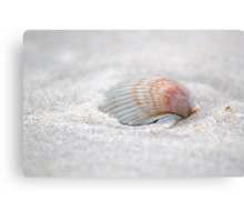 i got another seashell for you Canvas Print