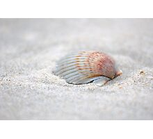 i got another seashell for you Photographic Print