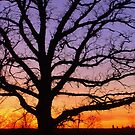 Tree of Life by Tate6