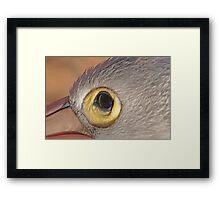 The Eye of the Pelican, Monkey Mia, Western Australia Framed Print