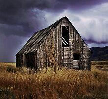Purple Rain by Anibal