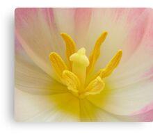 Tulip Closeness Canvas Print