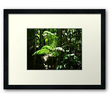 Rainforest New Growth Framed Print